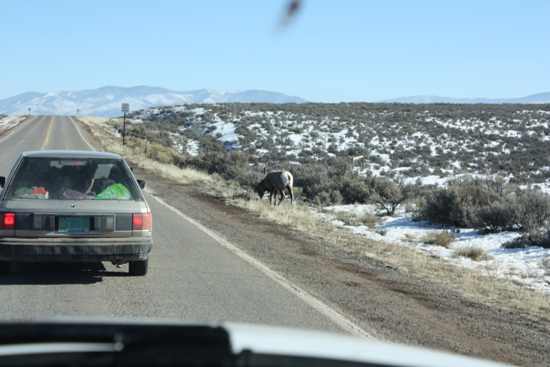 A bighorn sheep by the highway.