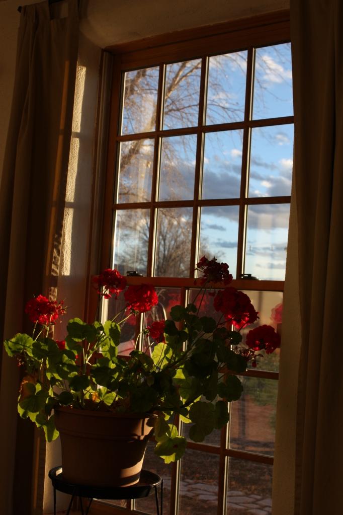 The geranium enjoys the sun and sky.