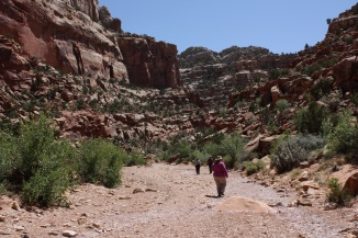 Capitol Reef Wash